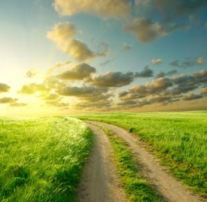 road grass sky