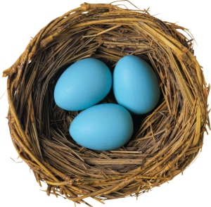 nest blue eggs