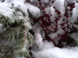 1 snow and berries