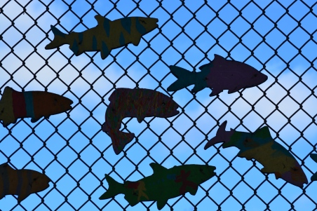 fish swimming sky