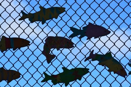 fish swimming sky